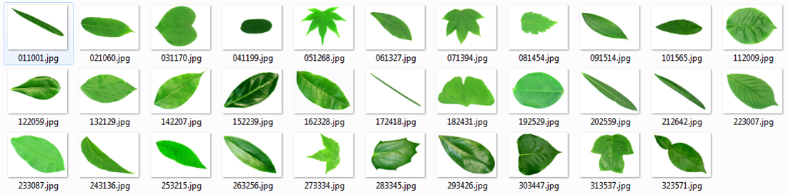 TTAC - Leaf based plant identification system for Android